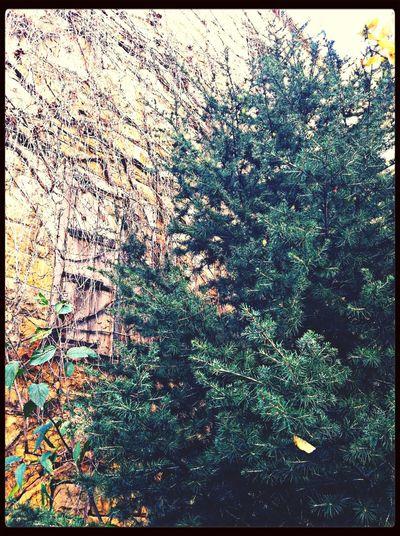 Tree Walking Around IPhone Photography