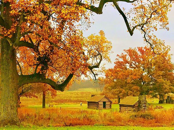 Tree Autumn Leaf Built Structure Scenics Nature Outdoors Beauty In Nature Landscape No People Tranquility Branch Rural Scene Tranquil Scene Growth Architecture Day Building Exterior Sky JeanneRotaMatthews From Where I Stand
