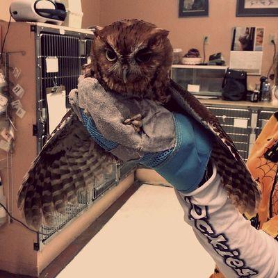 I <3 him Wildlife