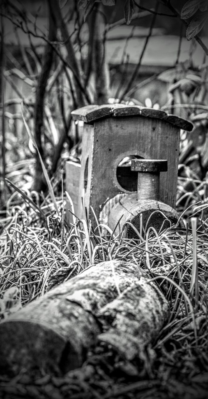 CLOSE-UP OF OLD ABANDONED ON FIELD IN FOREST