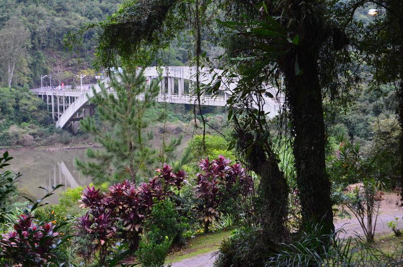 Nature Bridge Historic No People Tree
