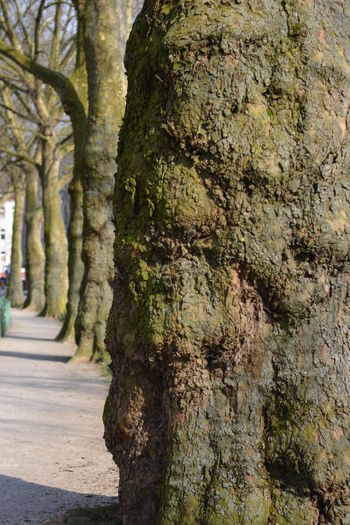It's not always the straightest Path , is it? Being Philosophical - Springtime Walk Trees Alley , Green ( No Filter ) Treetrunk Row Of Trees Row Of Things Things In A Row Large Group Of Objects