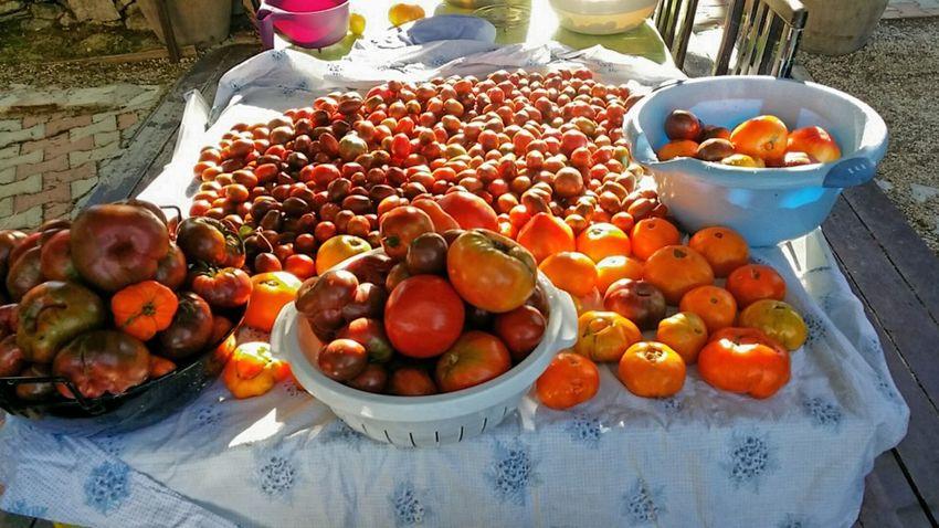 Tomates Tomatoes Coeur De Beuf Potager jardin Provence