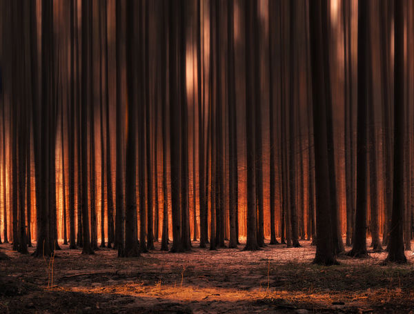 Backgrounds Forest Forest Photography Illuminated Light Nature Night No People Outdoors Sun Sunlight Sunrise Sunset Tree Trees Warm Winter Beautifully Organized Fresh on Market 2016 Always Be Cozy My Year My View Welcome To Black The Great Outdoors - 2017 EyeEm Awards See The Light