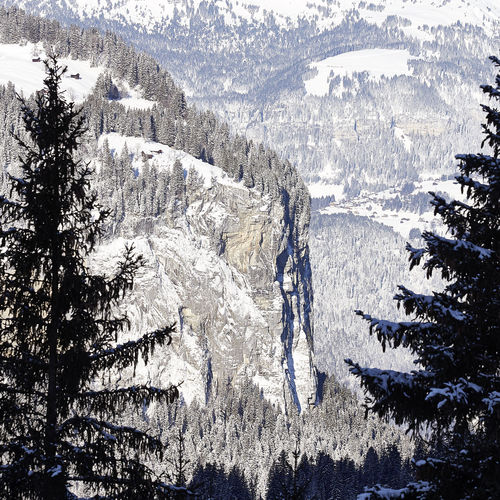 Beauty In Nature Cold Temperature Day Forest Frozen Landscape Mountain Mountain Range Nature No People Non-urban Scene Outdoors Physical Geography Pine Tree Scenics Snow Snowcapped Mountain Tranquil Scene Tranquility Tree Weather White Color Wilderness Wilderness Area Winter