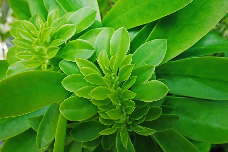 Green Color Leaf Plant Part Growth Plant Close-up Full Frame Beauty In Nature No People Nature Backgrounds Freshness Day High Angle View Outdoors Flower Food And Drink Herb Fragility Natural Pattern Flower Head