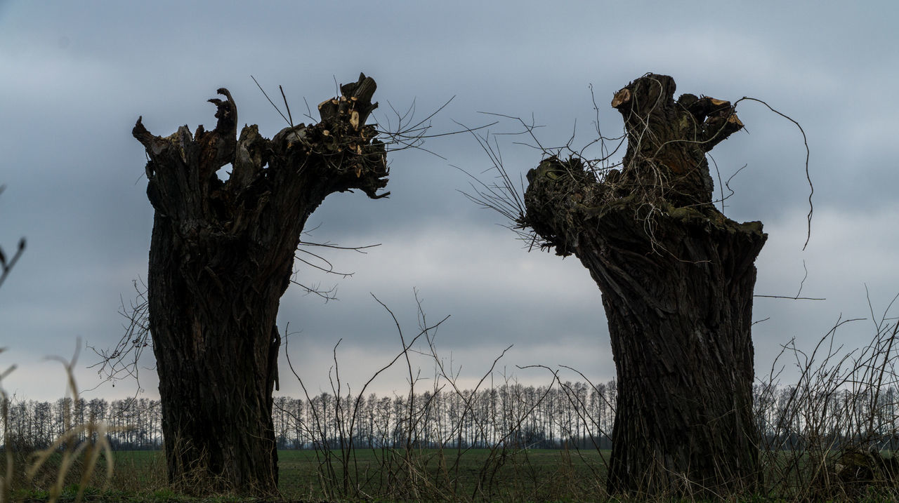 nature, tree trunk, tree, no people, dead tree, sky, dead plant, outdoors, day, tranquility, grass, beauty in nature, growth, wooden post, landscape, close-up