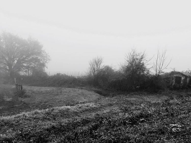 Imagine 💭 Nature Tree No People Landscape Fog Invisible EyeEm Best Shots EyeEm Nature Lover Mistery Photography Wood Field Hill Silence Italy