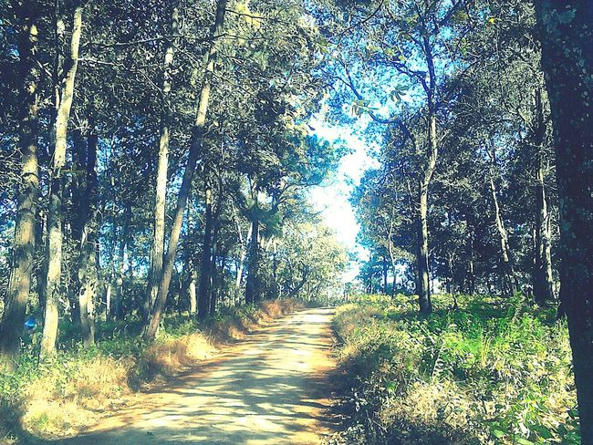 Tree Nature Day No People Forest Beauty In Nature Tranquility Scenics Sky Growth The Way Forward Outdoors Leaves🌿 Green Color Leaves And Colors