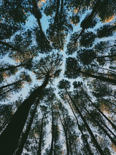 when you se me ? Green Forest Leaft Tree Low Angle View Plant No People Beauty In Nature Growth Nature Forest Sky Land Outdoors Scenics - Nature Tall - High