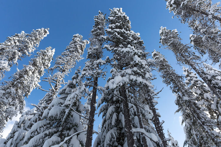 Winter wonderland of Mt.Hood, Oregon Forest Hood Mountain Oregon Portland, OR Snow Snow Covered Snow Lake Snow Mountain Snow Tree Winter Winter Wonderland Wonder