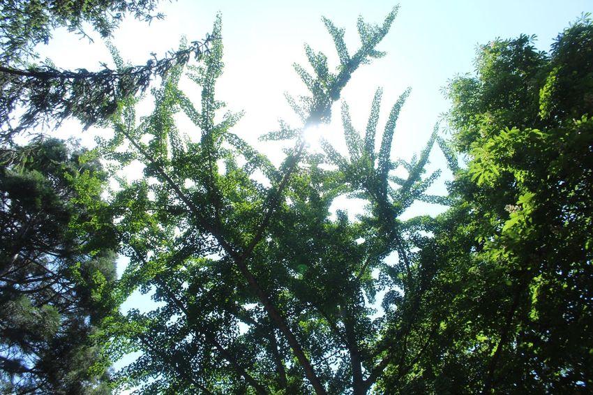 Arberotom Treeinthesky GreenAndBlue  Yalova