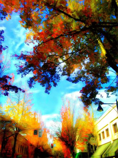 Building Exterior Tree Built Structure Nature City Architecture Outdoors Autumn Growth Multi Colored Leaf Beauty In Nature Vertical Cityscape The Week On EyeEem Essence Of Fall Outdoors Photograpghy  Isnt Nature Grand? The Way Forward Willamette Valley Down Town Small Town America EyeEm Photo Of The Day October Afternoon Scenics Traveling Home For The Holidays