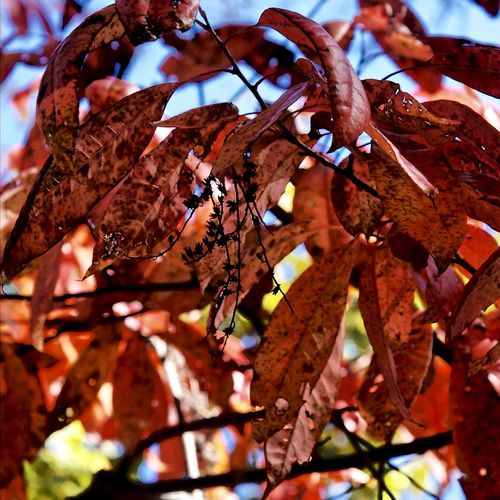 Low angle view of tree leaves during autumn