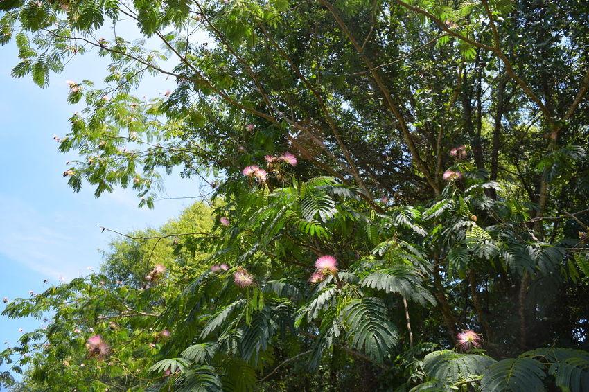 Alabama Outdoors Famosa Tree