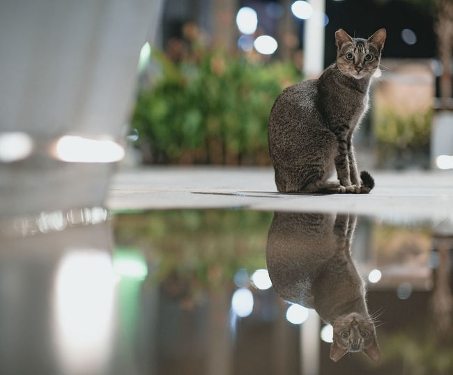 Seeing double Water Domestic Cat Reflection Animal Themes Close-up Feline EyeEmNewHere My Best Travel Photo