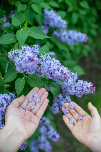 Human Hand Hand Flower Flowering Plant Plant Human Body Part Real People Freshness Purple One Person Holding Fragility Vulnerability  Lifestyles Day Nature Close-up Focus On Foreground Beauty In Nature Finger Outdoors Flower Head Lilac Happiness Happy Luck Rare Finds