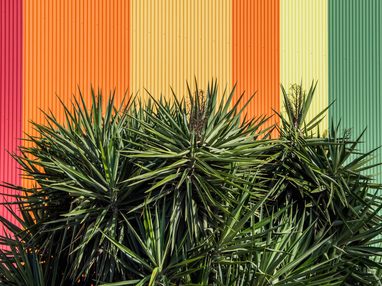 Plants growing against colorful wall