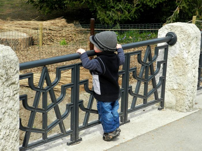 Adventure Boy Cute Day FamilyTime Hat Leisure Activity Myson Nature One Person Outdoors People Railing Rear View Zoo