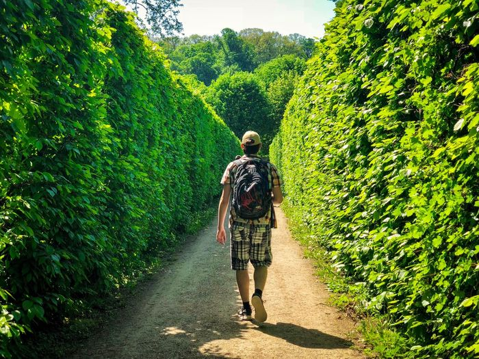 Rear View Of Man Walking On Footpath Amidst Plants