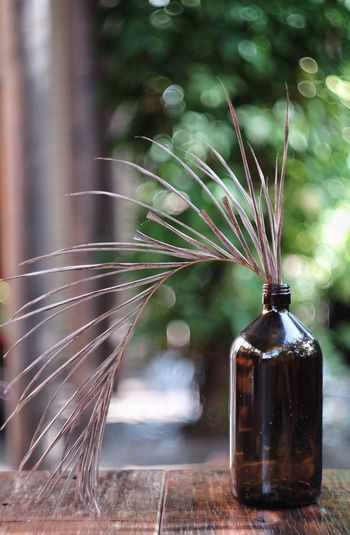 Bottle Focus On Foreground No People Jar Nature Water Freshness Indoors  Flower Close-up Day Outdoors Flowers Palm EyeEmNewHere
