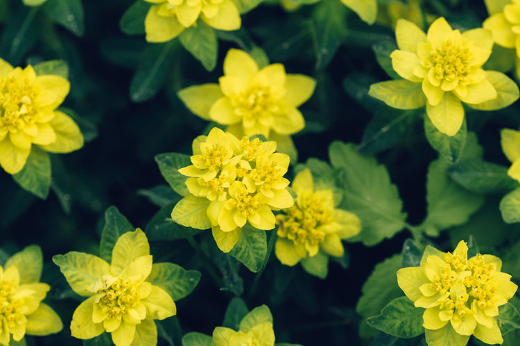 Close-up of yellow flowering plants