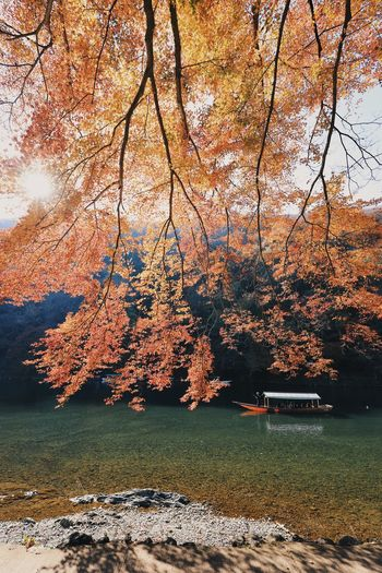 Autumn colors Autumn Leaves Japan Japanese Culture Autumn Autumn🍁🍁🍁 Beauty In Nature Change Day Environment Fall Growth Lake Land Landscape Nature No People Orange Color Outdoors Plant Scenics - Nature Tranquil Scene Tranquility Tree Water The Traveler - 2018 EyeEm Awards
