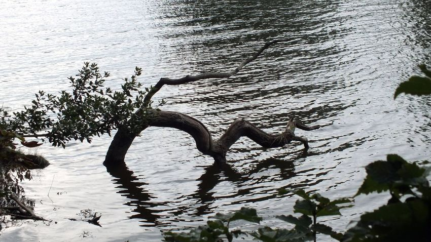 Beauty In Nature Day High Angle View Lake Land Motion Nature No People Non-urban Scene Outdoors Plant Reflection Rippled Tranquil Scene Tranquility Tree Water Waterfront