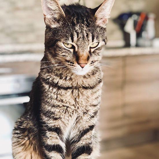 Animal Themes Animal Feline Cat One Animal Mammal No People