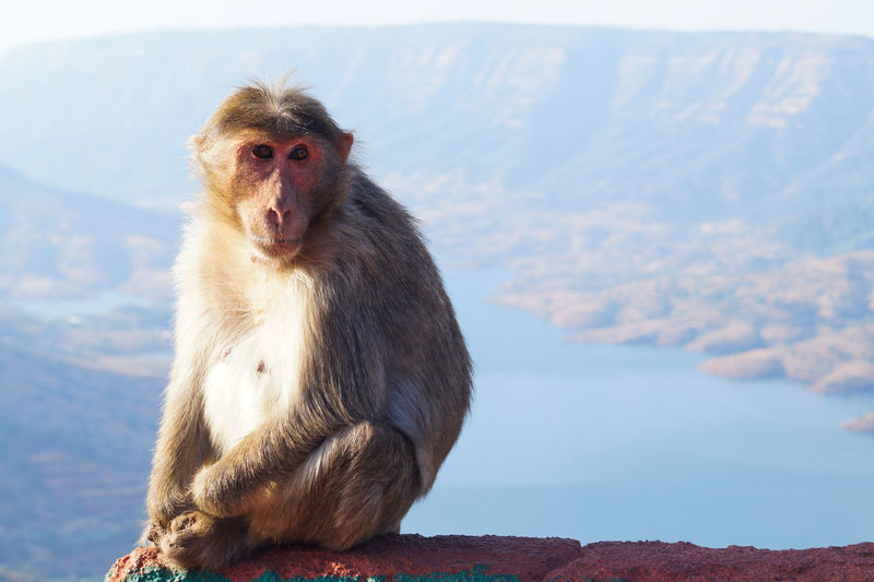 Portrait of monkey sitting on mountain against sky