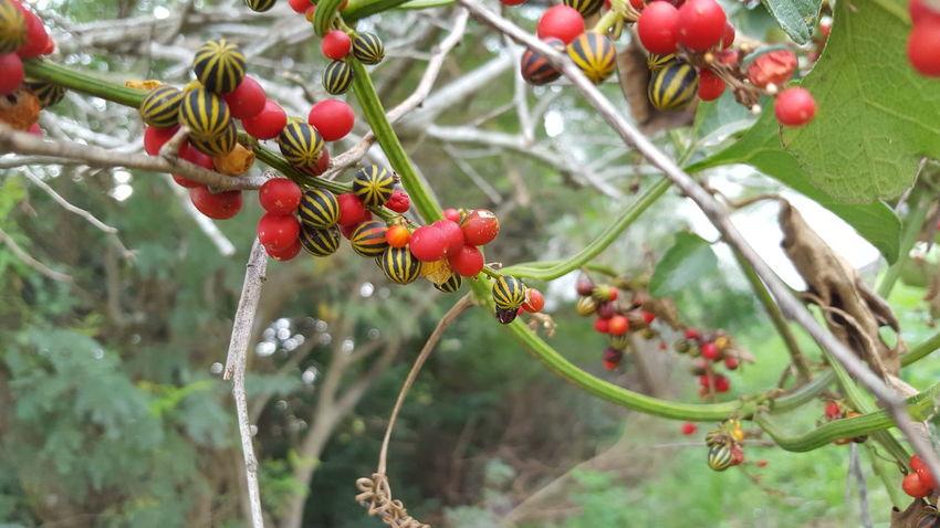 Little Fruit Fruit Red Orange Yellow Fruits Colorful EyeEmNewHere