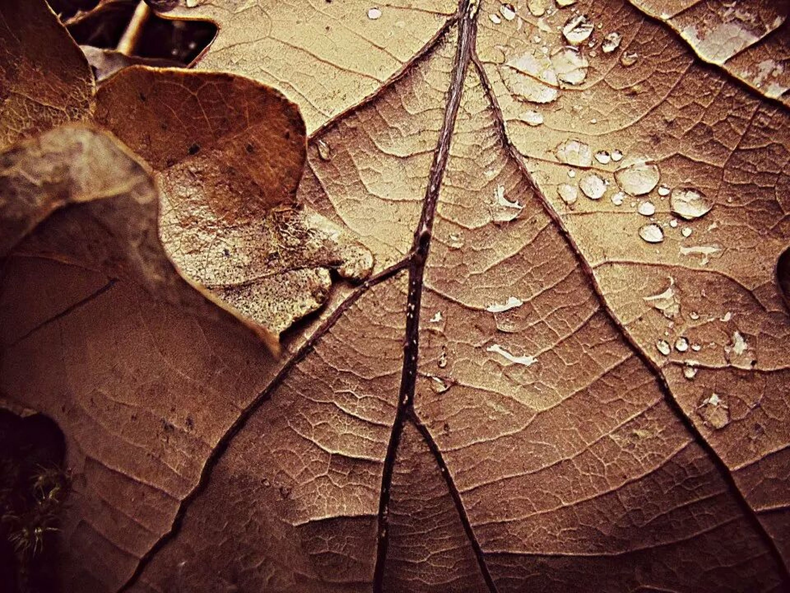 high angle view, water, wet, close-up, leaf, season, nature, outdoors, day, no people, street, textured, pattern, sunlight, dry, backgrounds, shadow, autumn, full frame, reflection
