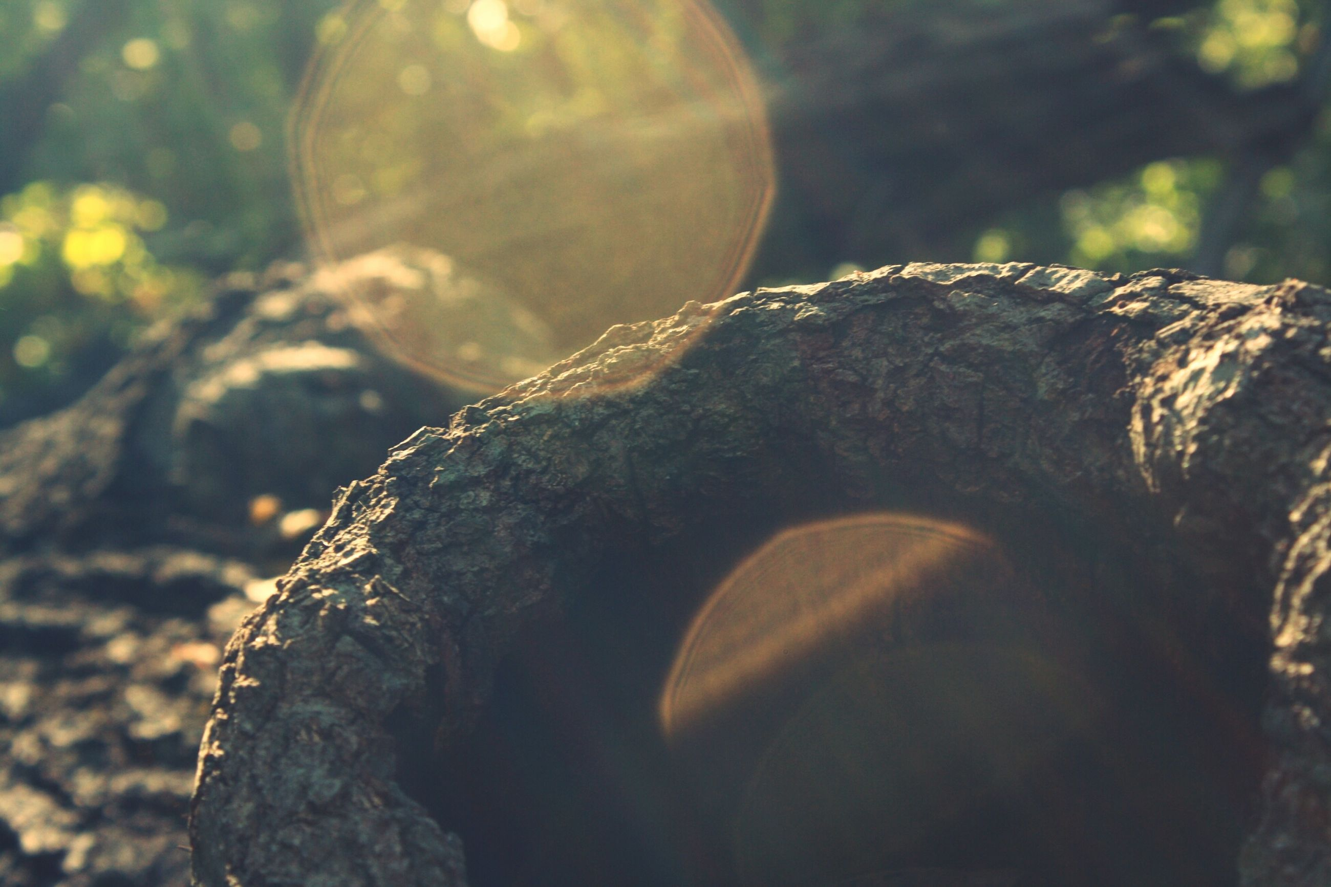 close-up, tree, sunlight, nature, rock - object, lens flare, textured, focus on foreground, outdoors, tranquility, tree trunk, day, natural pattern, beauty in nature, forest, part of, no people, rough, low angle view, growth