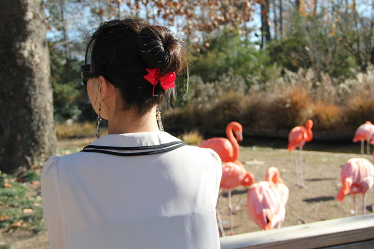 Rear view of woman by flamingos at zoo