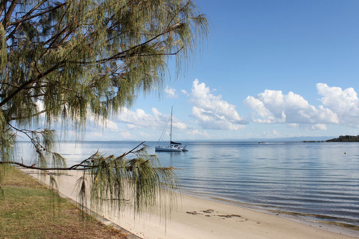 Catamarand Sail Boat in Harbor seen from beach with pine tree in foreground - mountains and clouds in Beautiful Catamaran Holiday SAFE HAVEN Travel Bay Blue Coast Island Portrait Safe Harbour Sail Sailboat Sailing Scenics Sea Ship Shore Sky Summer Tourism Tranquility Tropical Water Yacht