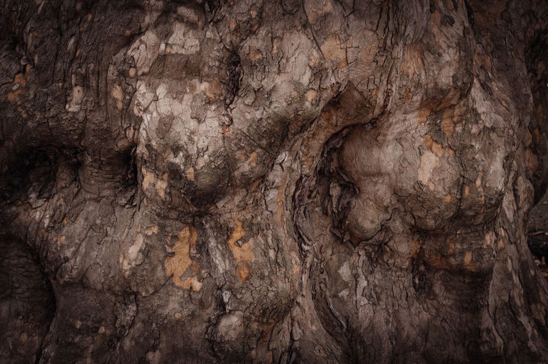 In the forest. Tree bark A Walk In The Woods Brown Dark Wood Texture Forest Forest Park Forestwalk Growing In The Forest In The Woods Into The Woods Mystery Rough Texture Textured  Tree Tree Bark Tree Bark Wood Trees Walking In The Woods Wood Wood Texture Wooden Wooden Texture Wooden Texture Background Woods