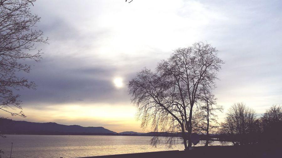 Lake View EyeEm Nature Lover Eyeem Made In Gernany 🇩🇪Photos Club📷 Konstanz Beautiful Day
