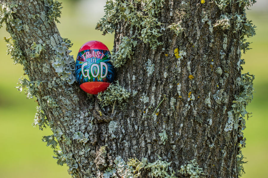 Bark Close-up Day Easter Easter Eggs God Green Color Growth Nature No People Outdoors Plastic Easter Eggs Red Text Tree Trust