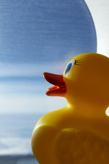 Close-up of rubber duck by airplane window