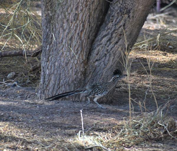 View of lizard on tree trunk in field