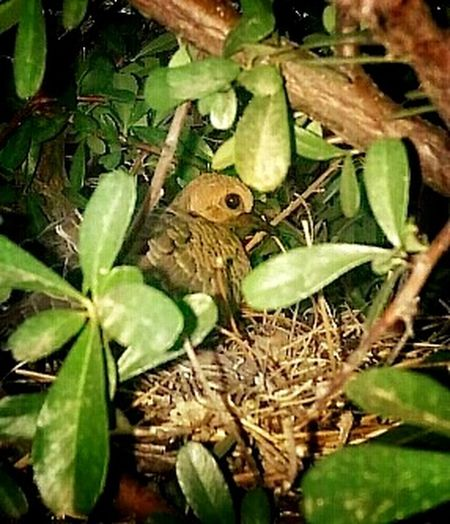 Check This Out Look What I Found Baby Dove Nesting Birds Dove In A Tree My Backyard 💜