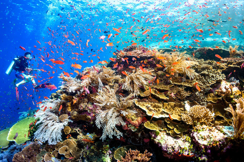indonesia Underwater Animals In The Wild Sea Life Sea Water Animal Wildlife UnderSea Animal Themes Coral Marine Animal Vertebrate Fish Large Group Of Animals Invertebrate Group Of Animals Reef Swimming Nature School Of Fish No People Ecosystem  Underwater Diving