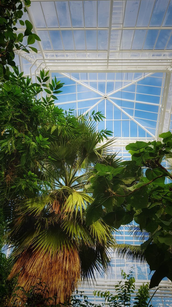plant, growth, tree, day, architecture, built structure, nature, glass - material, low angle view, green color, indoors, leaf, no people, plant part, greenhouse, transparent, ceiling, sunlight, sky, plant nursery