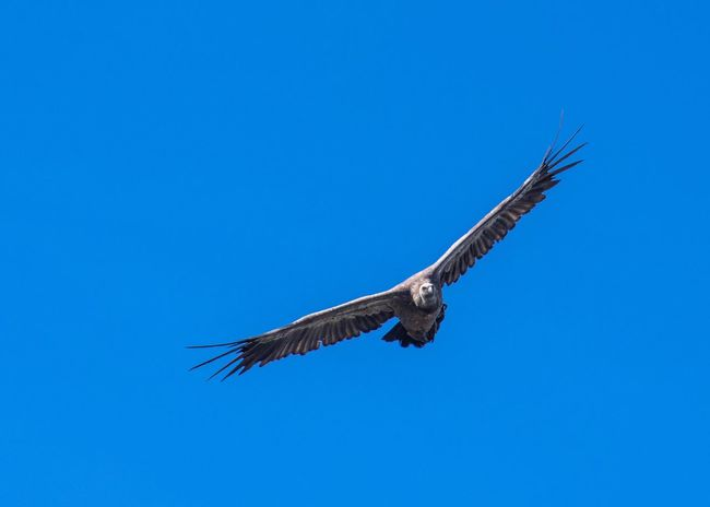 Eagle Flying Animals In The Wild One Animal Animal Wildlife Animal Themes Bird Of Prey Bird
