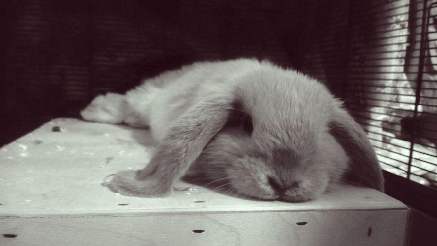 OMG, Tomorrow is Monday!! Omg Tomorrow Monday Pet I Love My Pet Rabbit🐰❤️ Sunday Night Lazy Hungary