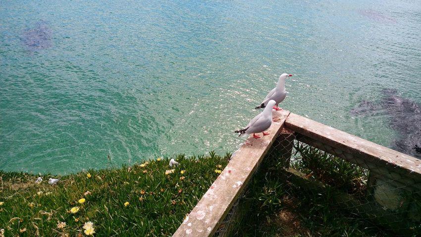 Birds, seaside