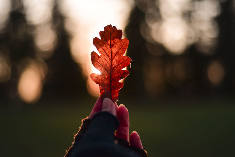 Autumn Autumn colors Hand Keep  Woman Bokeh Season  Leaf Leaf 🍂 Human Hand Flower Flower Head Red Tree Sunlight Leaf Springtime Close-up Sky Flowering Plant Maple Leaf Plant Life Leaves Fall Fallen Leaf Vein In Bloom Pollen Fallen Leaf Maple Tree