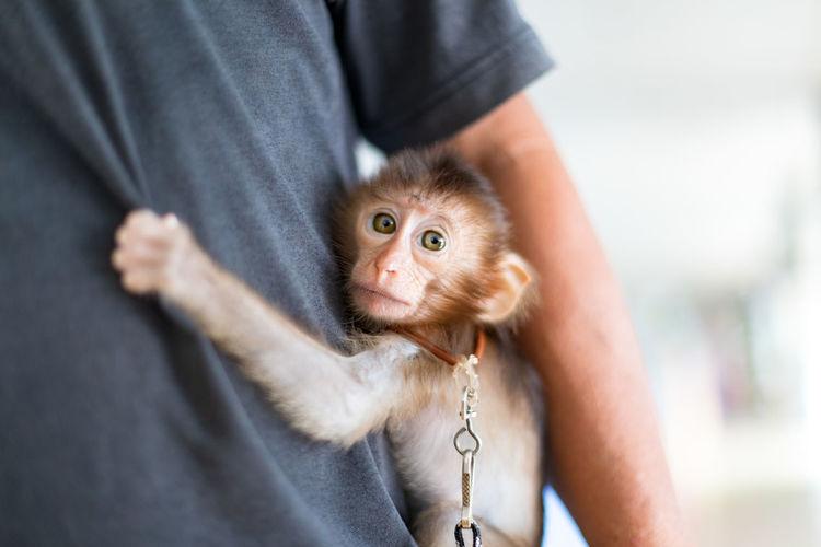 Portrait of man holding monkey