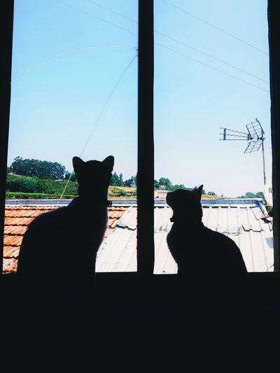 partners Window Glass Perspective Phonecamera PhonePhotography SamsungGalaxyS8 Light And Shadow Dark Animals Sunset Shadow Sun Cat Light Blue Sky Sky And Clouds Home Cutepet Sunny Day View Posing Catlovers Lines Bird Pets Feline Domestic Cat Silhouette Living Organism Sky