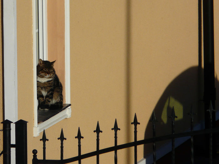 Cat sitting against wall